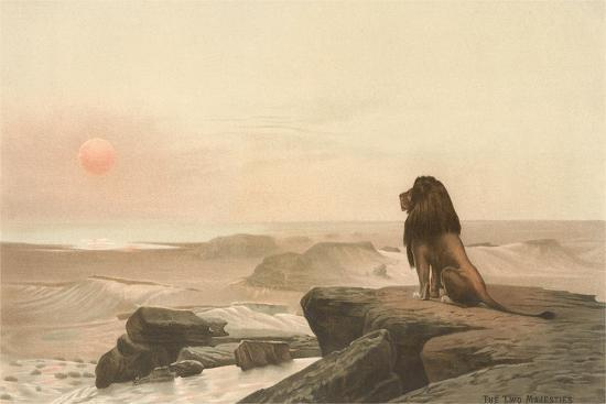 Lion Watching Sunset--Art Print