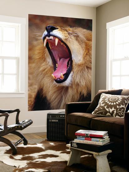 Lion Yawns in Moremi Wildlife Reserve-Richard l'Anson-Giant Art Print