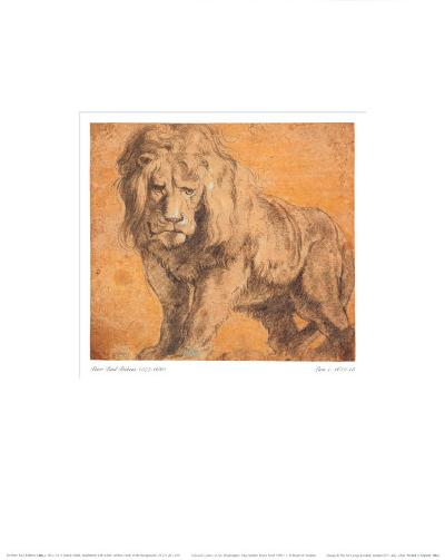 Lion-Peter Paul Rubens-Art Print