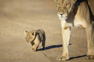 Lioness and Cub, Botswana-Richard Du Toit-Photographic Print