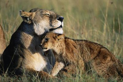 Lioness and Cub Resting on the Savanna--Photographic Print