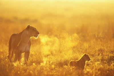 Lioness and Cub--Photographic Print