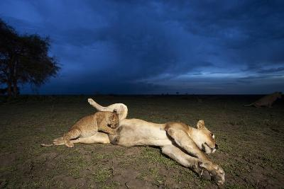 Lioness and Cub-Paul Souders-Photographic Print