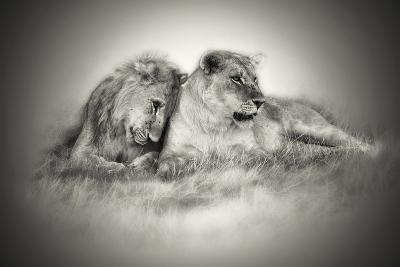 Lioness and Son Sitting and Nuzzling in Botswana Grassland, Africa-Sheila Haddad-Photographic Print