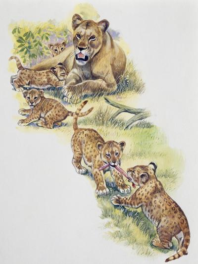 Lioness (Panthera Leo) with Her Cubs, Felidae--Giclee Print