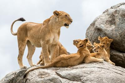 Lioness, Panthera Leo, with its Cubs on a Rock-Tom Murphy-Photographic Print