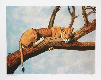 Lioness Sambaru-Caroline Schultz-Collectable Print