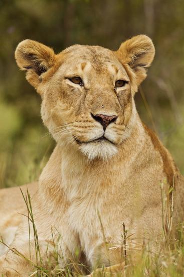 Lioness Up Close, Maasai Mara Wildlife Reserve, Kenya-Jagdeep Rajput-Photographic Print