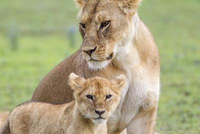 Lioness with its Cub Standing Together, Ngorongoro, Tanzania-James Heupel-Photographic Print