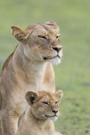 Lioness with its Female Cub, Standing Together, Side by Side-James Heupel-Photographic Print
