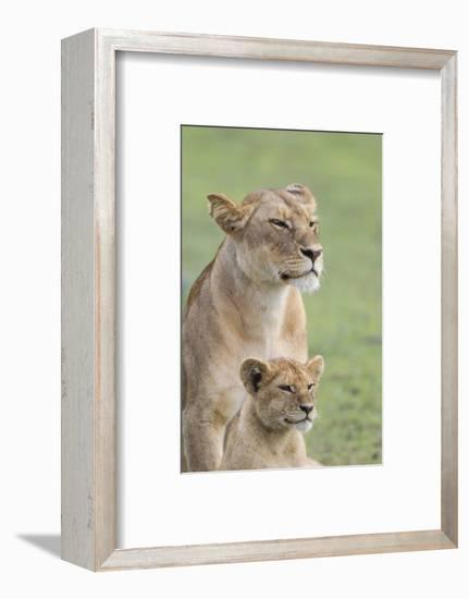 Lioness with its Female Cub, Standing Together, Side by Side-James Heupel-Framed Photographic Print