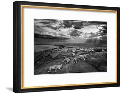 Lionesses and cubs from the Vumbi lion pride rest on a kopje, a rocky outcrop.-Michael Nichols-Framed Photographic Print