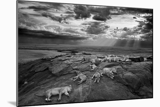 Lionesses and cubs from the Vumbi lion pride rest on a kopje, a rocky outcrop.-Michael Nichols-Mounted Photographic Print