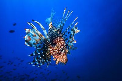 Lionfish-Barathieu Gabriel-Photographic Print