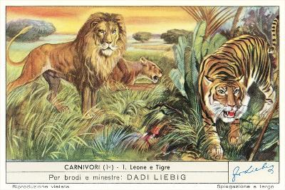 Lions and Tiger--Art Print