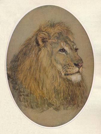 https://imgc.artprintimages.com/img/print/lions-head-c1896_u-l-q13fn1j0.jpg?p=0