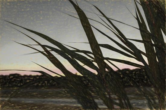 Liquid Pencil Drawing Giant Reeds After Sunset-Anthony Paladino-Giclee Print
