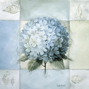 Blue Hydrangea Study 2 by Lisa Audit