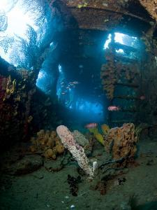 Coral Growth Inside Wreck of Lesleen M Freighter, Sunk in 1985 in Anse Cochon Bay, St Lucia by Lisa Collins