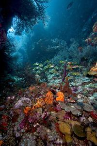 Reef Scene, Dominica, West Indies, Caribbean, Central America by Lisa Collins