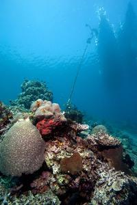 Reef Scene, Komodo, Indonesia, Southeast Asia, Asia by Lisa Collins