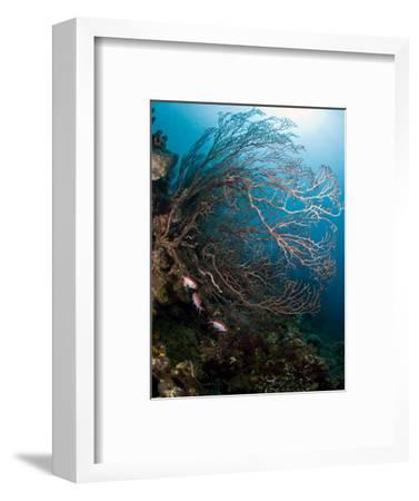Reef Scene with Sea Fan, St. Lucia, West Indies, Caribbean, Central America