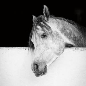 Lonesome Gray Crop by Lisa Cueman
