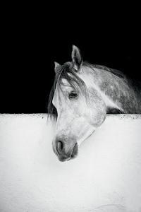 Lonesome Gray by Lisa Cueman