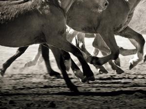 Off to the Races Crop by Lisa Cueman