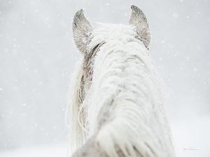 Winter Dreaming by Lisa Cueman