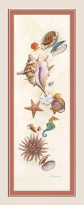 Seashell Island by Lisa Danielle
