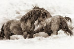 Brothers by Lisa Dearing