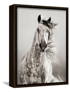 Caballo de Andaluz by Lisa Dearing
