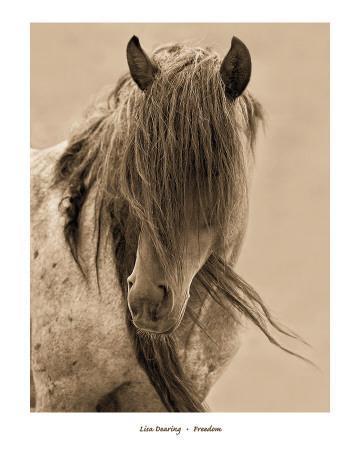 Reneades By Lisa Dearing Horses Western Print 36x17