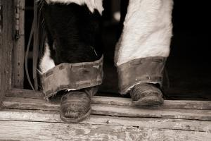 Furry Chaps by Lisa Dearing