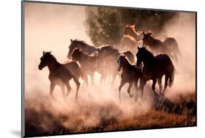 Horses by Lisa Dearing