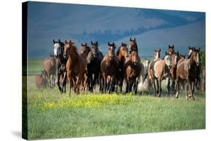 Montana Thunder by Lisa Dearing