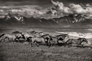 Mountain Range Mavericks by Lisa Dearing