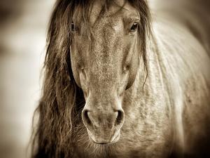 Mustang Sally by Lisa Dearing