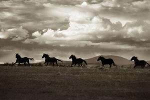 Racing the Clouds by Lisa Dearing