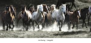 Renegades by Lisa Dearing