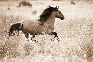 Running Free by Lisa Dearing