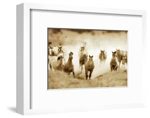 San Cristobol Horses by Lisa Dearing