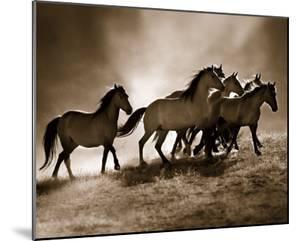Wild Horses by Lisa Dearing