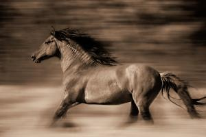 Wind Runner by Lisa Dearing