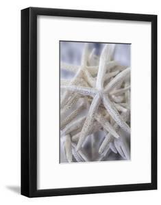 Jumbo White Spider Star, USA by Lisa Engelbrecht