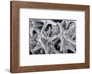 Knobby Starfish, USA by Lisa Engelbrecht