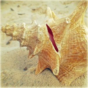 Conch by Lisa Hill Saghini