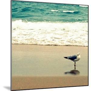 Seagull on Beach by Lisa Hill Saghini