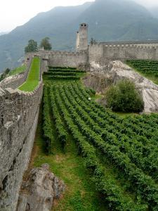 Castelgrande Vineyards and Fortified Walls, Bellinzona, Switzerland by Lisa S^ Engelbrecht